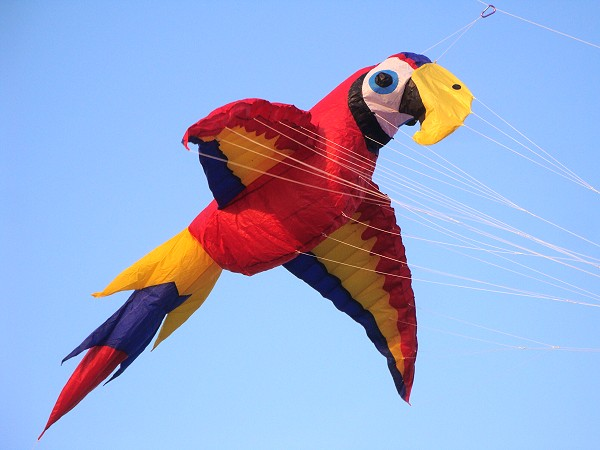 9ft Scarlet Macaw